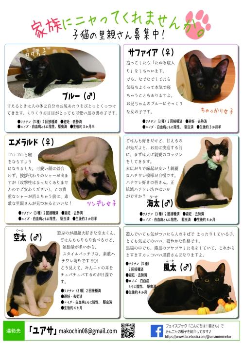 子猫チラシ