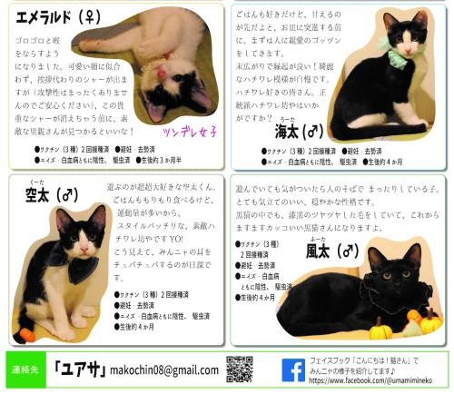 子猫チラシ修正1